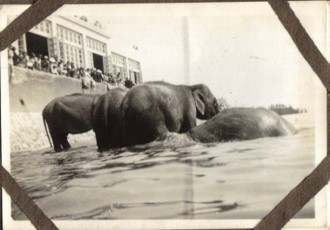 Bathing Elephants in Clacton